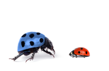 scaled ladybugs2 Want to be a standout brand? Avoid these 5 costly mistakes.